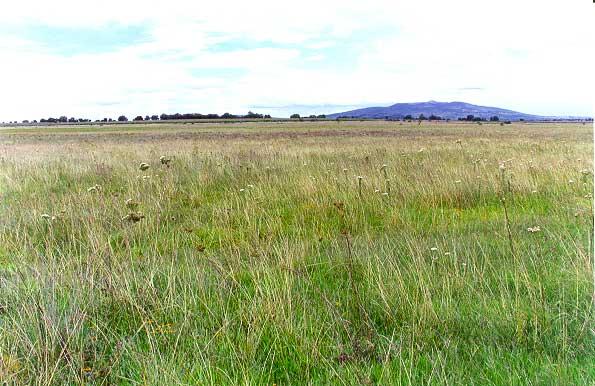 main grassland vegetation