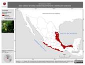 Mapa ilustrativo de Amazona oratrix (loro cabeza-amarilla) residencia permanente. Distribución potencial.