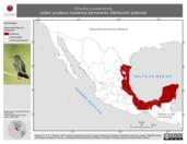 Mapa ilustrativo de Amazilia yucatanensis (colibrí yucateco) residencia permanente. Distribución potencial.