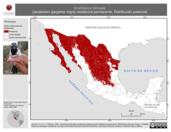 Mapa ilustrativo de Amphispiza bilineata (zacatonero garganta negra) residencia permanente. Distribución potencial.
