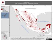 Mapa ilustrativo de Anas acuta (pato golondrino) invierno. Distribución potencial.