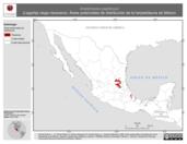Mapa ilustrativo de Anelytropsis papillosus (Lagartija ciega mexicana). Área de distribución potencial. La proyección citada, es exclusiva para el diseño de esta imagen.