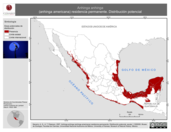 Mapa ilustrativo de Anhinga anhinga (anhinga americana) residencia permanente. Distribución potencial.