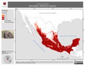 Mapa ilustrativo de Anoura geoffroyi (Murciélago). Distribución potencial. La proyección citada, es exclusiva para el diseño de esta imagen.
