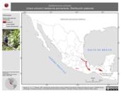 Mapa ilustrativo de Aphelocoma unicolor (chara unicolor) residencia permanente. Distribución potencial.