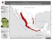 Mapa ilustrativo de Ara militaris (guacamaya verde). Distribución potencial. La proyección citada, es exclusiva para el diseño de esta imagen.