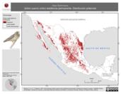 Mapa ilustrativo de Asio flammeus (búho cuerno corto) residencia permanente. Distribución potencial.