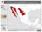 Mapa ilustrativo de Aspidoscelis tigris (Huico occidental). Área de distribución potencial. La proyección citada, es exclusiva para el diseño de esta imagen.