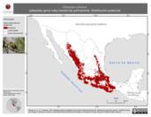 Mapa ilustrativo de Atlapetes pileatus (atlapetes gorra rufa) residencia permanente. Distribución potencial.
