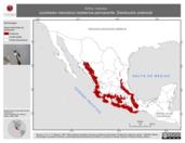 Mapa ilustrativo de Atthis heloisa (zumbador mexicano) residencia permanente. Distribución potencial.
