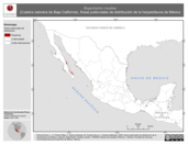 Mapa ilustrativo de Bogertophis rosaliae (Culebra ratonera de Baja California). Área de distribución potencial. La proyección citada, es exclusiva para el diseño de esta imagen.
