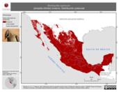 Mapa ilustrativo de Bombycilla cedrorum (ampelis chinito) invierno. Distribución potencial.
