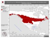 Mapa ilustrativo de Bombycilla garrulus (Bohemian Waxwing) en época de invernación del Hemisferio Norte. Distribución potencial.
