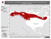 Mapa ilustrativo de Bombycilla garrulus (Bohemian Waxwing) en época de anidación del Hemisferio Norte. Distribución potencial.