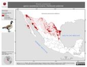 Mapa ilustrativo de Branta canadensis (ganso canadiense) invierno. Distribución potencial.