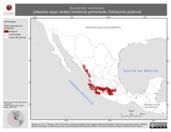 Mapa ilustrativo de Buarremon virenticeps (atlapetes rayas verdes) residencia permanente. Distribución potencial.