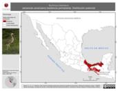 Mapa ilustrativo de Burhinus bistriatus (alcaraván americano) residencia permanente. Distribución potencial.