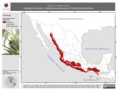 Mapa ilustrativo de Cacicus melanicterus (cacique mexicano) residencia permanente. Distribución potencial.