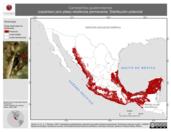 Mapa ilustrativo de Campephilus guatemalensis (carpintero pico plata) residencia permanente. Distribución potencial.