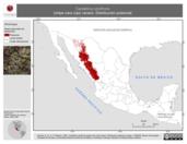 Mapa ilustrativo de Cardellina rubrifrons (chipe cara roja) verano. Distribución potencial.