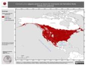 Mapa ilustrativo de Carduelis pinus (jilguero pinero) en época de invernación del Hemisferio Norte. Distribución potencial.