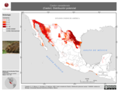 Mapa ilustrativo de Castor canadensis (Castor). Distribución potencial.