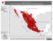 Mapa ilustrativo de Catharus mexicanus (zorzal corona negra) residencia permanente. Distribución potencial.