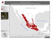 Mapa ilustrativo de Catharus occidentalis (zorzal mexicano) residencia permanente. Distribución potencial.