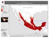 Mapa ilustrativo de Centurio senex (Murciélago). Distribución potencial.