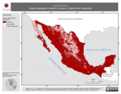 Mapa ilustrativo de Ceryle alcyon (martín-pescador norteño) invierno. Distribución potencial.