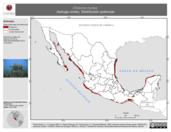 Mapa ilustrativo de Chelonia mydas (tortuga verde). Distribución potencial. La proyección citada, es exclusiva para el diseño de esta imagen.