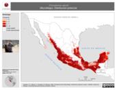 Mapa ilustrativo de Chiroderma salvini (Murciélago). Distribución potencial.