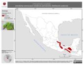 Mapa ilustrativo de Chlorophonia occipitalis (clorofonia corona-azul) residencia permanente. Distribución potencial.