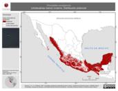 Mapa ilustrativo de Chordeiles acutipennis (chotacabras menor) invierno. Distribución potencial.