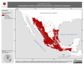Mapa ilustrativo de Chordeiles minor (chotacabras zumbón) residencia permanente. Distribución potencial.