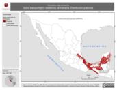 Mapa ilustrativo de Ciccaba nigrolineata (búho blanquinegro) residencia permanente. Distribución potencial.