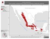 Mapa ilustrativo de Cinclus mexicanus (mirlo-acuático norteamericano) residencia permanente. Distribución potencial.