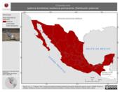 Mapa ilustrativo de Columba livia (paloma doméstica) residencia permanente. Distribución potencial.