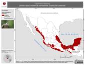 Mapa ilustrativo de Columbina talpacoti (tórtola rojiza) residencia permanente. Distribución potencial.
