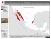 Mapa ilustrativo de Crotalus enyo (Víbora cascabel bajacaliforniana). Área de distribución potencial. La proyección citada, es exclusiva para el diseño de esta imagen.