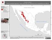 Mapa ilustrativo de Crotalus willardi (Víbora cascabel bigotuda). Área de distribución potencial. La proyección citada, es exclusiva para el diseño de esta imagen.