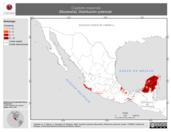 Mapa ilustrativo de Cryptotis mayensis (Musaraña). Distribución potencial.