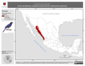Mapa ilustrativo de Cyanocorax beecheii (chara de Beechy) residencia permanente. Distribución potencial.