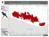 Mapa ilustrativo de Cyanolyca mirabilis (chara garganta blanca) residencia permanente. Distribución potencial.