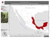 Mapa ilustrativo de Cyanocorax morio (chara papán) residencia permanente. Distribución potencial.