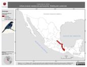 Mapa ilustrativo de Cyanolyca nana (chara enana) residencia permanente. Distribución potencial.