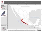 Mapa ilustrativo de Cyanocorax sanblasianus (chara de San Blas) residencia permanente. Distribución potencial.