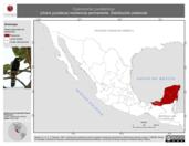 Mapa ilustrativo de Cyanocorax yucatanicus (chara yucateca) residencia permanente. Distribución potencial.