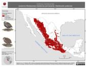 Mapa ilustrativo de Cyrtonyx montezumae (codorniz Moctezuma) residencia permanente. Distribución potencial.