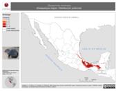 Mapa ilustrativo de Dasyprocta mexicana (Guaqueque negro). Distribución potencial. La proyección citada, es exclusiva para el diseño de esta imagen.